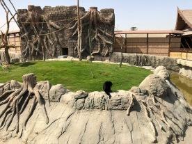 IMG_83091 Dubai Safari Park Review .