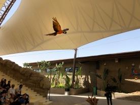 IMG_83421 Dubai Safari Park Review .