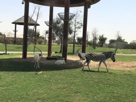 IMG_83531 Dubai Safari Park Review .