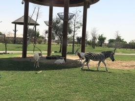 IMG_83531 Dubai Safari Park Review .