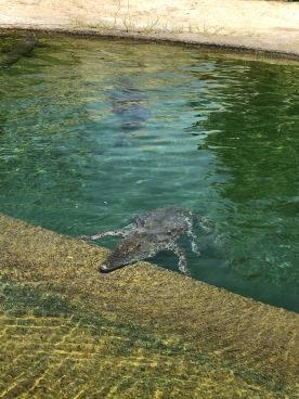 IMG_83711 Dubai Safari Park Review .