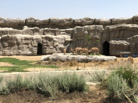 IMG_83751 Dubai Safari Park Review .
