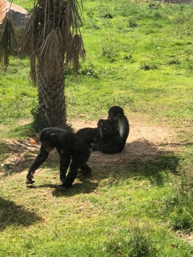 IMG_84531 Dubai Safari Park Review .