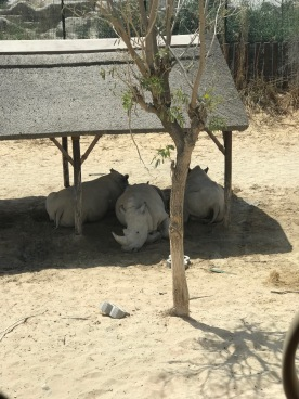 IMG_84621 Dubai Safari Park Review .
